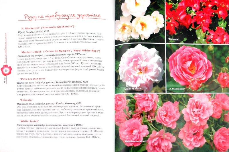 Иллюстрация 1 из 10 для Розы - Евгений Писарев | Лабиринт - книги. Источник: Лабиринт