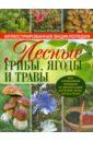 Лесные грибы, ягоды и травы, Ильина Татьяна Александровна