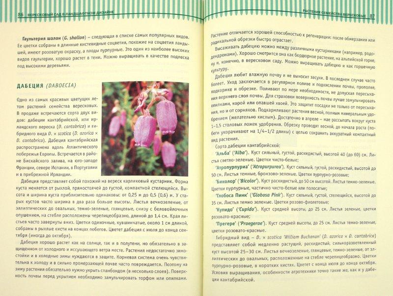 Иллюстрация 1 из 23 для Вересковый сад в ландшафтном дизайне - Татьяна Курлович | Лабиринт - книги. Источник: Лабиринт