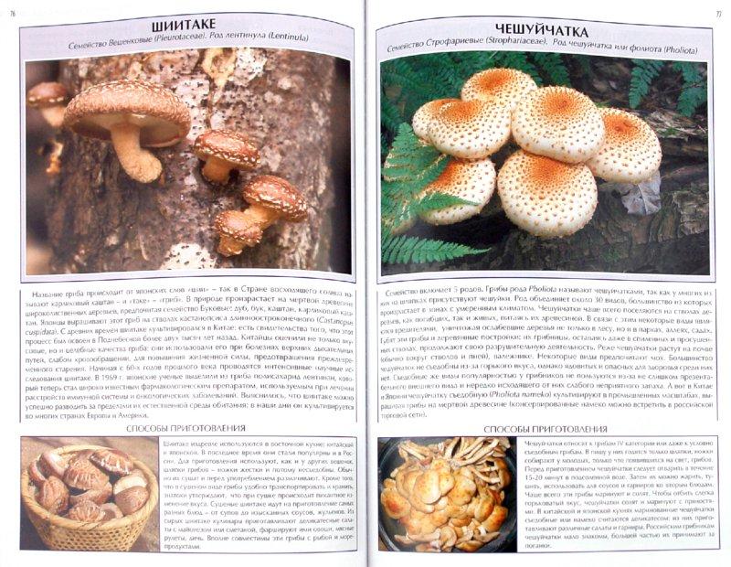 Иллюстрация 1 из 14 для Все о съедобных грибах. Атлас-справочник - Джаспер Стоун | Лабиринт - книги. Источник: Лабиринт