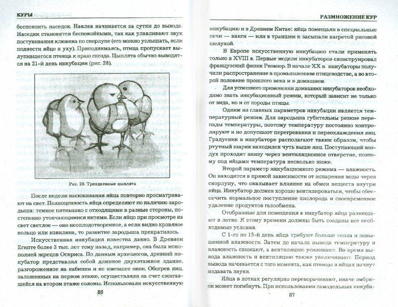 Иллюстрация 1 из 36 для Куры. Разведение и уход - Юлия Сергиенко   Лабиринт - книги. Источник: Лабиринт