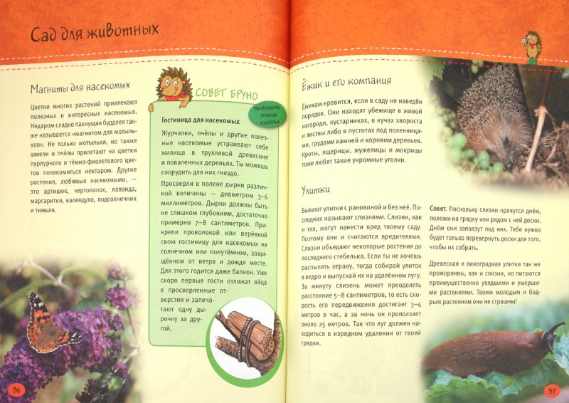 Иллюстрация 1 из 6 для Маленький садовник. Вырасти цветы, ягоды и овощи сам! - Анке Кюппер | Лабиринт - книги. Источник: Лабиринт