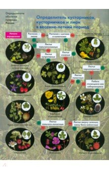 Определитель кустарников, кустарничков и лиан в весенне-летний период