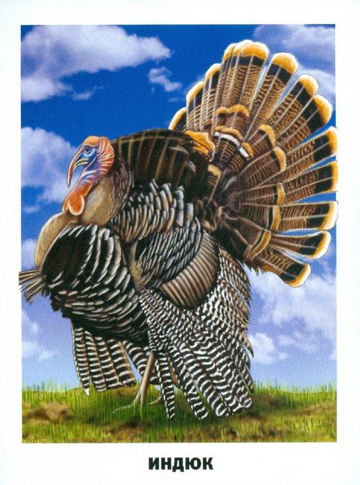 Иллюстрация 1 из 33 для Обучающие карточки. Домашние животные и птицы   Лабиринт - книги. Источник: Лабиринт