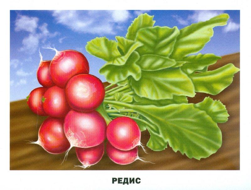Иллюстрация 1 из 24 для Обучающие карточки. Овощи и фрукты | Лабиринт - книги. Источник: Лабиринт