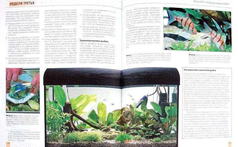 Иллюстрация 1 из 7 для Аквариум в вашем доме. Шаг за шагом - Стюарт Трейвз | Лабиринт - книги. Источник: Лабиринт