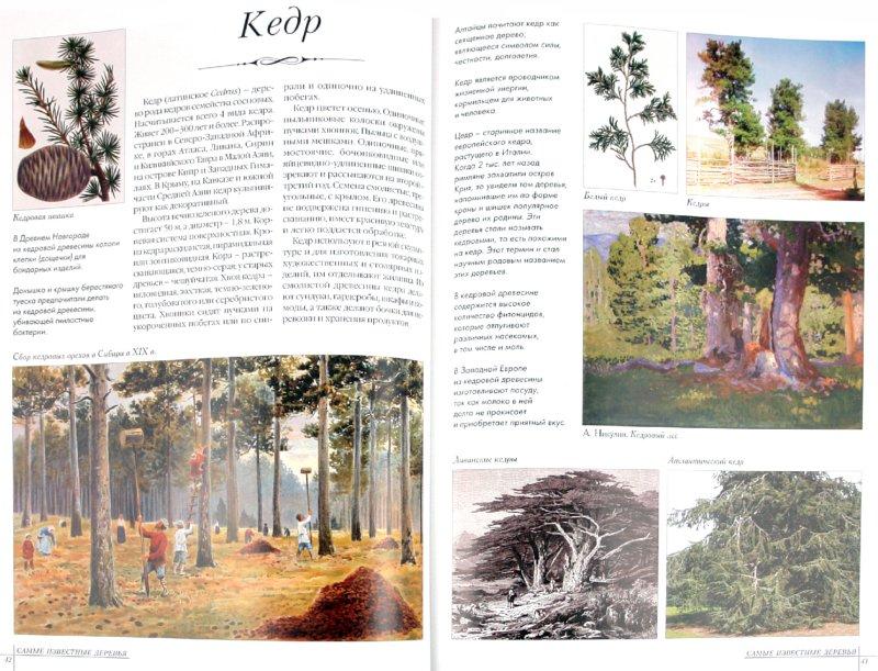 Иллюстрация 1 из 40 для Самые известные деревья   Лабиринт - книги. Источник: Лабиринт