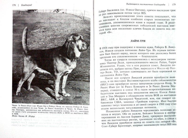 Иллюстрация 1 из 11 для Бладхаунд - Бри, Рид | Лабиринт - книги. Источник: Лабиринт
