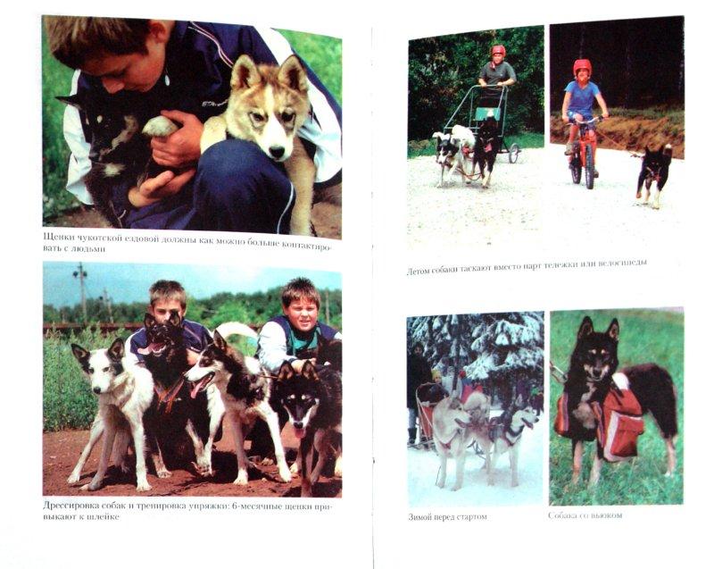 Иллюстрация 1 из 12 для Ездовые собаки - Поцелуева, Озерова, Чебыкина | Лабиринт - книги. Источник: Лабиринт