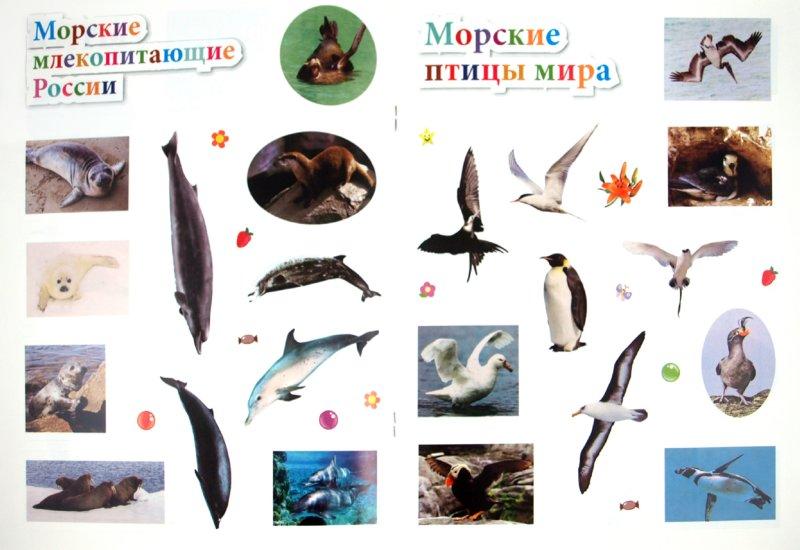 Иллюстрация 1 из 11 для Морские животные. 45 интересных фактов - Наталья Костина | Лабиринт - книги. Источник: Лабиринт