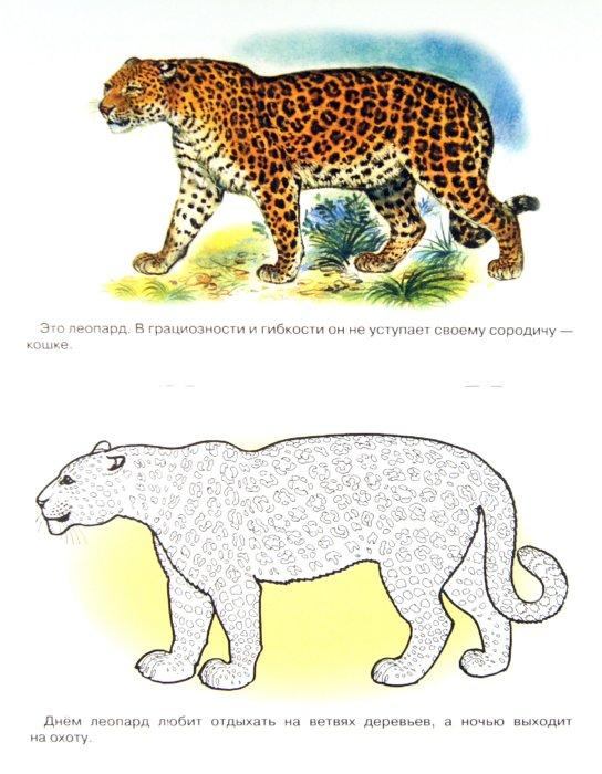 Иллюстрация 1 из 5 для Раскраска. Животные Африки. | Лабиринт - книги. Источник: Лабиринт