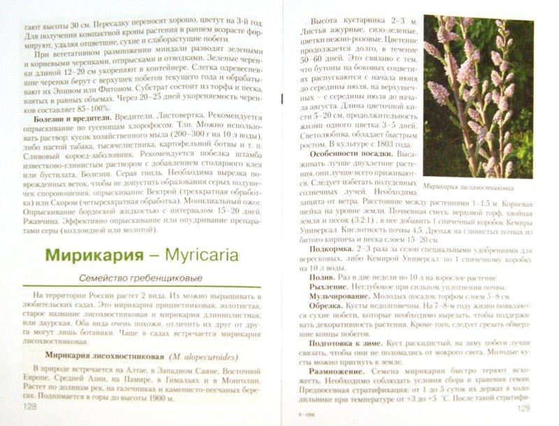 Иллюстрация 1 из 14 для Декоративные кустарники для вашего сада - Майя Александрова   Лабиринт - книги. Источник: Лабиринт