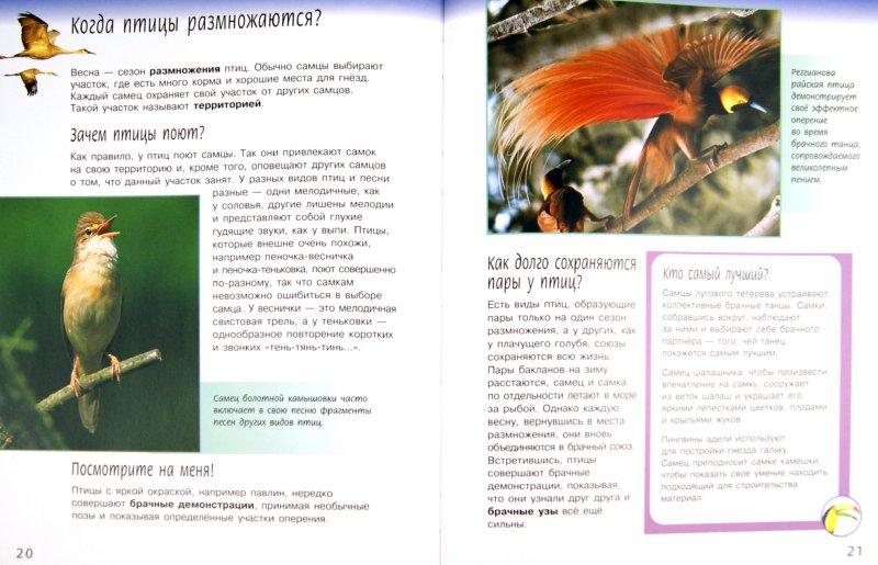 Иллюстрация 1 из 20 для Жизненный цикл птиц - Майк Ануин | Лабиринт - книги. Источник: Лабиринт