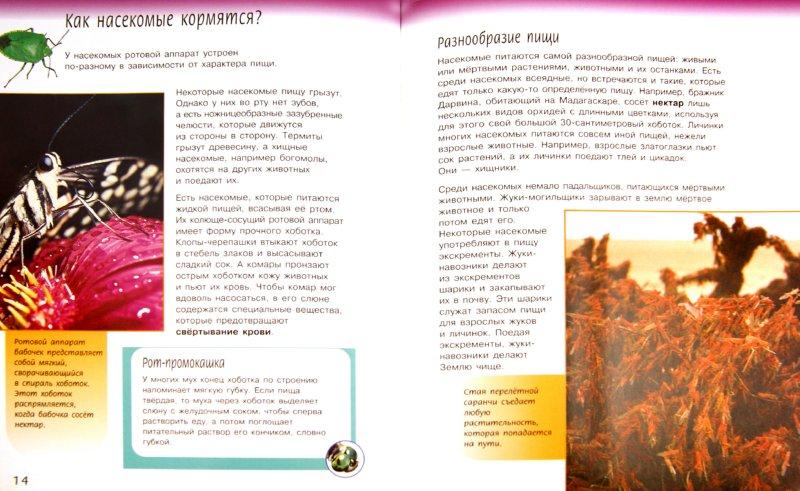 Иллюстрация 1 из 28 для Жизненный цикл насекомых - Спилсбери, Спилсбери | Лабиринт - книги. Источник: Лабиринт