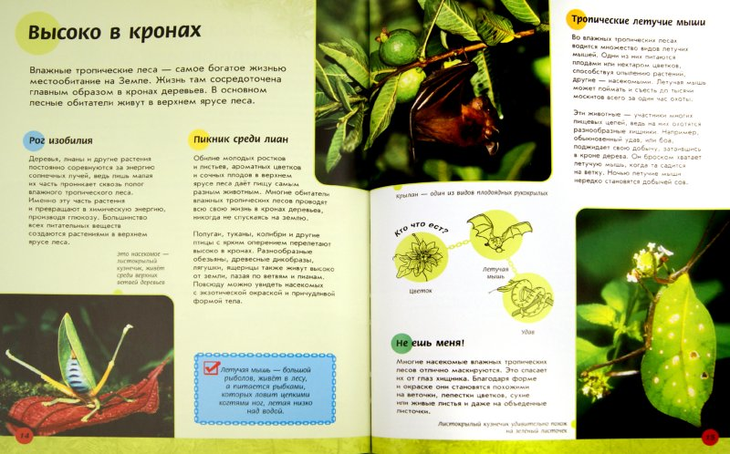 Иллюстрация 1 из 9 для Кто кого ест в тропических лесах? - Роберт Снедден | Лабиринт - книги. Источник: Лабиринт