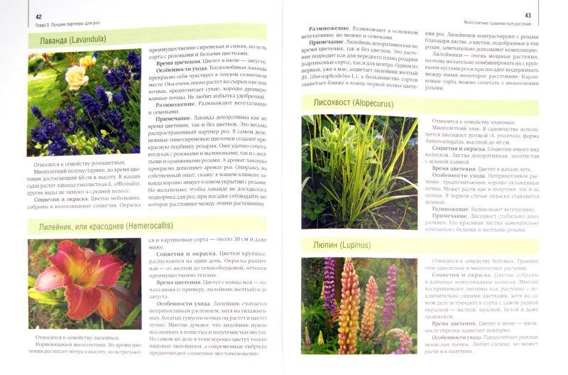 Иллюстрация 1 из 27 для Розы в дизайне вашего сада - Юлия Тадеуш | Лабиринт - книги. Источник: Лабиринт