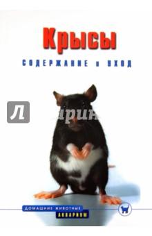 Крысы. Содержание и уход