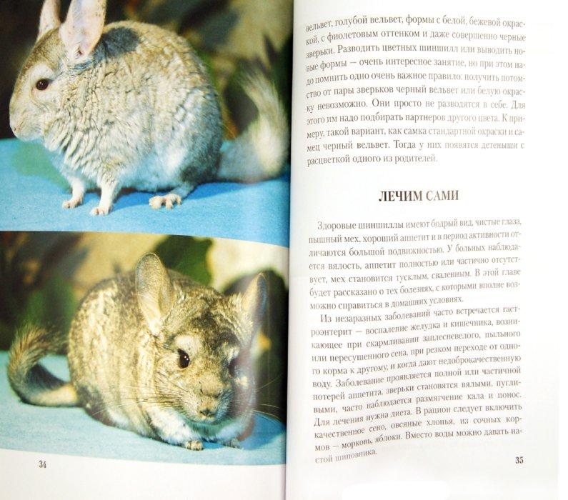 Иллюстрация 1 из 14 для Шиншиллы. Содержание и уход - А. Козлов | Лабиринт - книги. Источник: Лабиринт