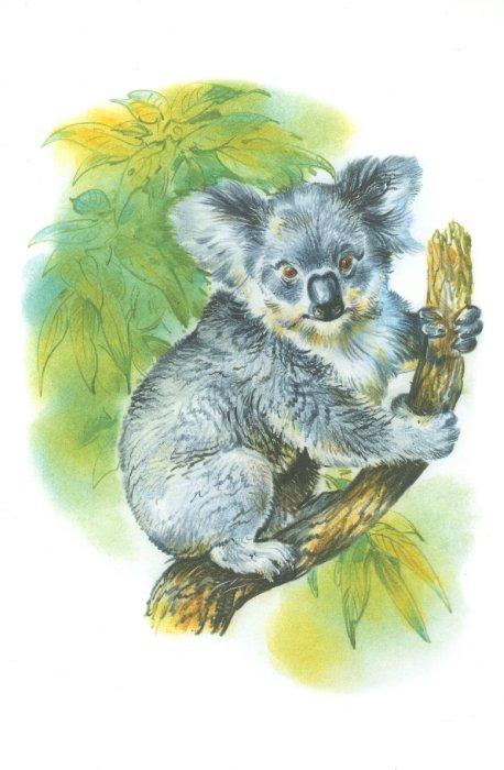 Иллюстрация 1 из 11 для Дидактический материал. Животные Америки и Австралии - Татьяна Куликовская   Лабиринт - книги. Источник: Лабиринт