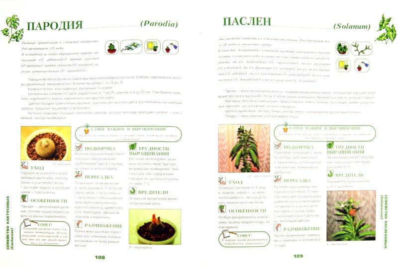 Иллюстрация 1 из 25 для Иллюстрированная энциклопедия комнатных растений | Лабиринт - книги. Источник: Лабиринт