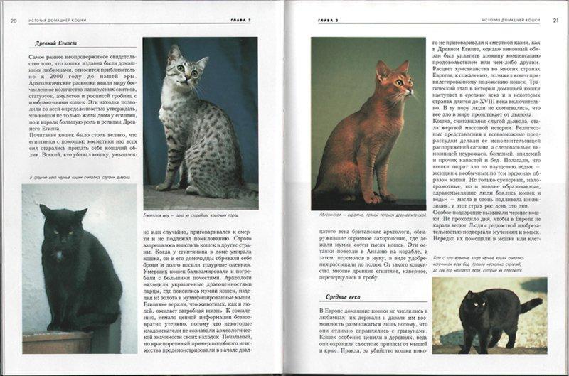 Иллюстрация 1 из 24 для Кошки - Эстер Верхойф-Верхаллен | Лабиринт - книги. Источник: Лабиринт