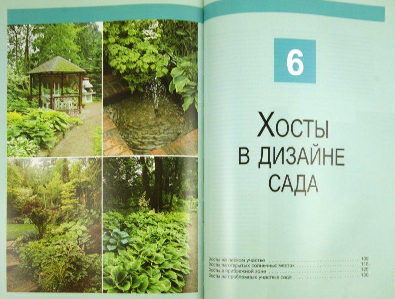 Иллюстрация 1 из 10 для Хосты в дизайне вашего сада - Наталия Кузнецова | Лабиринт - книги. Источник: Лабиринт
