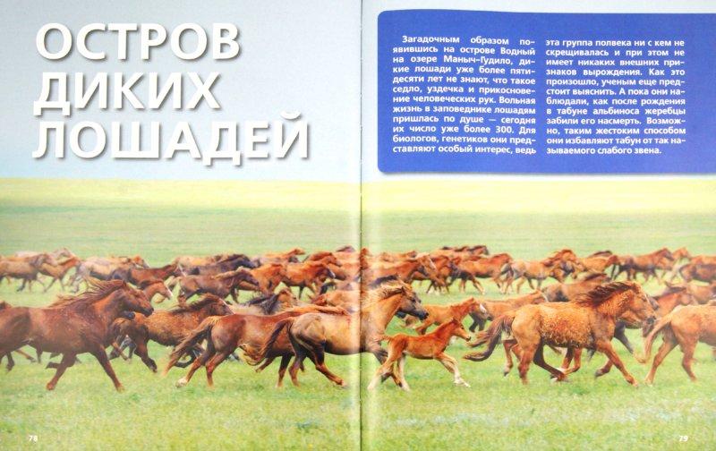 Иллюстрация 1 из 37 для Дикие животные России | Лабиринт - книги. Источник: Лабиринт