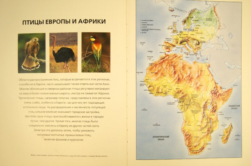 Иллюстрация 1 из 31 для Птицы. Визуальная энциклопедия - Дэвид Элдертон   Лабиринт - книги. Источник: Лабиринт