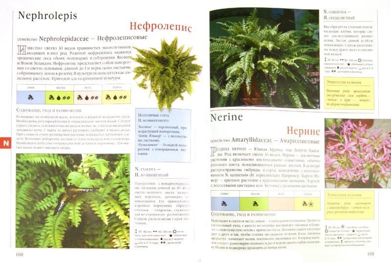 Иллюстрация 1 из 10 для Библия комнатных растений - Ирина Березкина | Лабиринт - книги. Источник: Лабиринт