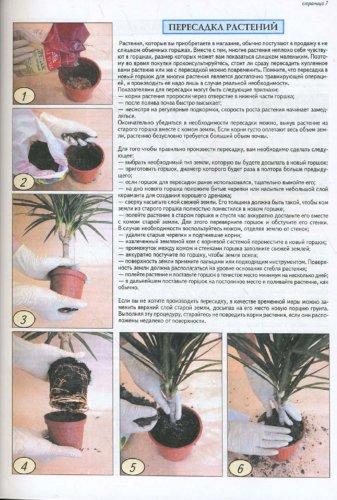 Иллюстрация 1 из 6 для Все о комнатных растениях - Неер Ян Ван дер   Лабиринт - книги. Источник: Лабиринт