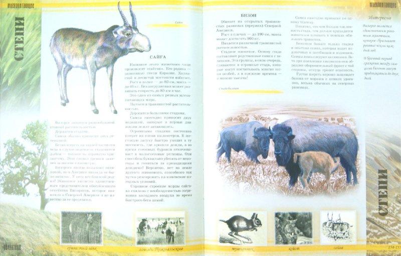 Иллюстрация 1 из 4 для Мир животных - Цеханская, Стрелков | Лабиринт - книги. Источник: Лабиринт