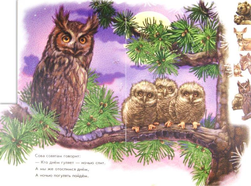 Иллюстрация 1 из 13 для В лесу - Ринат Курмашев | Лабиринт - книги. Источник: Лабиринт
