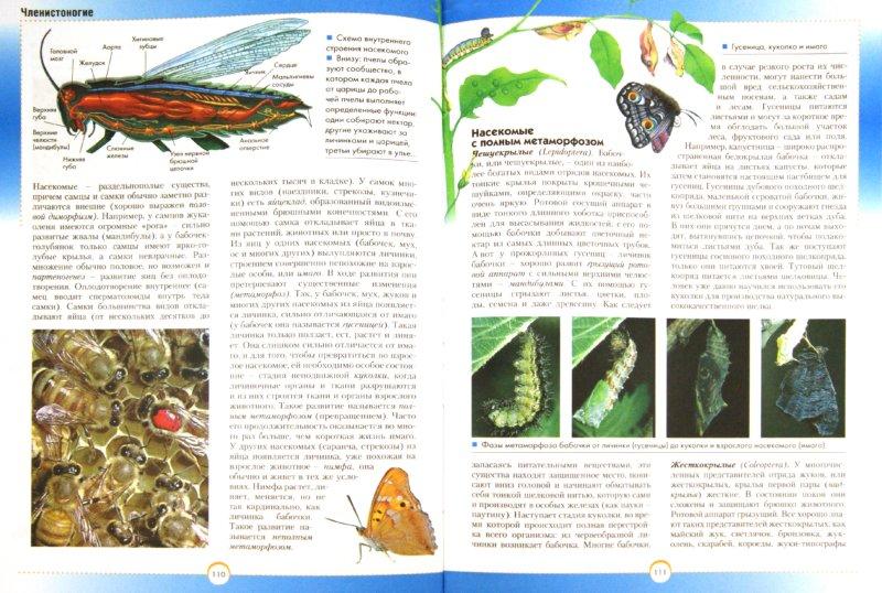 Иллюстрация 1 из 20 для Тайны живой природы - Ренато Капорали | Лабиринт - книги. Источник: Лабиринт