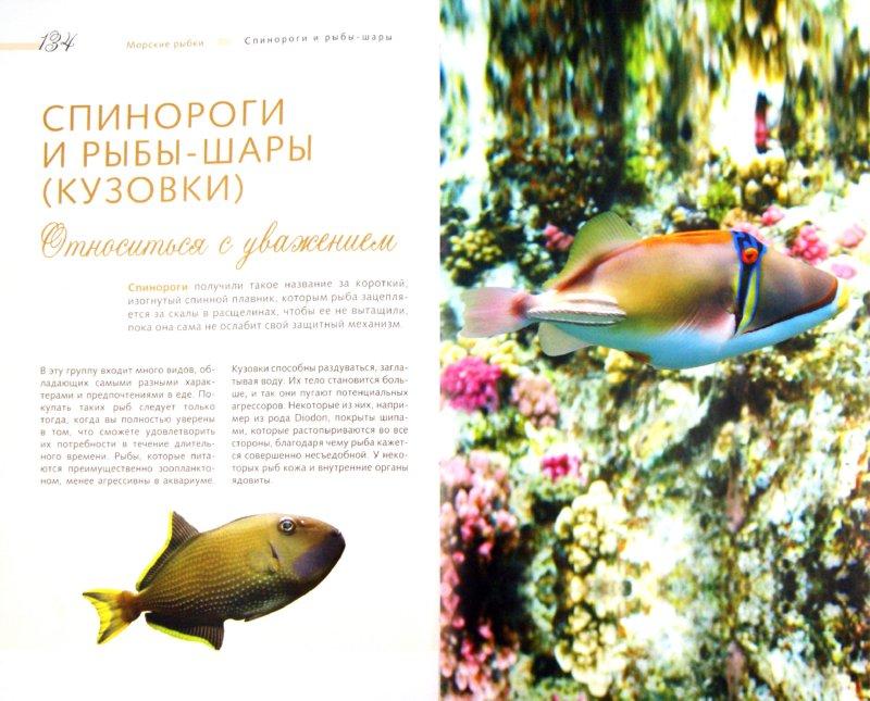Иллюстрация 1 из 12 для Морской аквариум - Тристан Логер | Лабиринт - книги. Источник: Лабиринт
