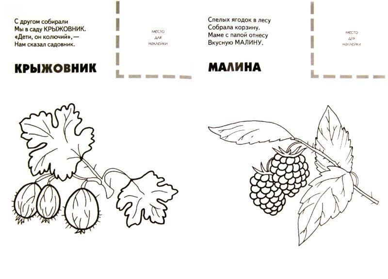 Иллюстрация 1 из 9 для Назови, раскрась, наклей: Ягоды - Бурмистрова, Мороз | Лабиринт - книги. Источник: Лабиринт
