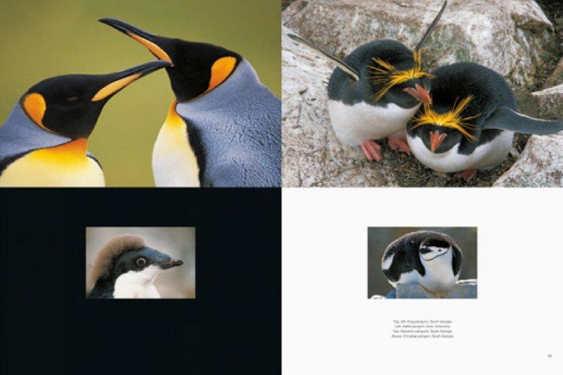 Иллюстрация 1 из 2 для Penguin - Frans Lanting | Лабиринт - книги. Источник: Лабиринт