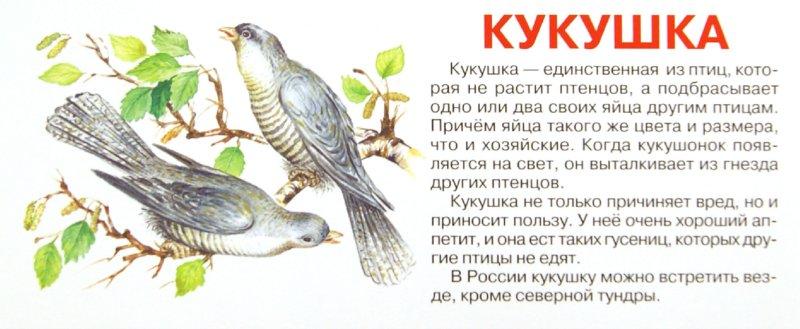 Иллюстрация 1 из 7 для Птицы. Набор карточек   Лабиринт - книги. Источник: Лабиринт