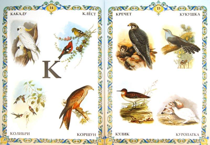Иллюстрация 1 из 6 для Птицы. Иллюстрированная азбука | Лабиринт - книги. Источник: Лабиринт