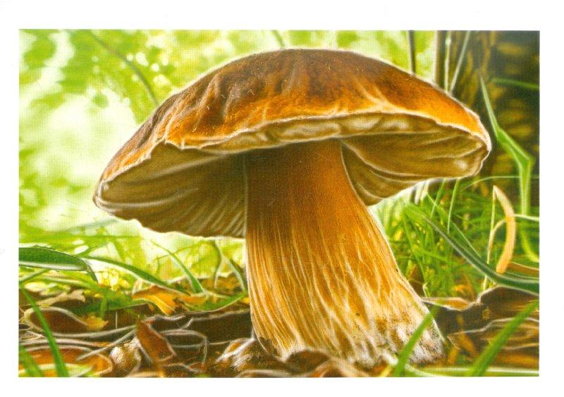 Иллюстрация 1 из 28 для Грибы и ягоды. Обучающие карточки | Лабиринт - книги. Источник: Лабиринт