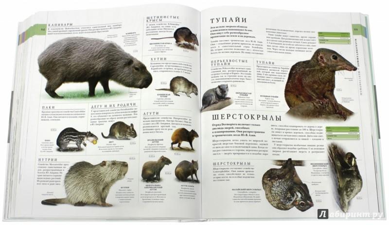Иллюстрация 1 из 46 для Мир природы - Битти, Диминг, Бир | Лабиринт - книги. Источник: Лабиринт