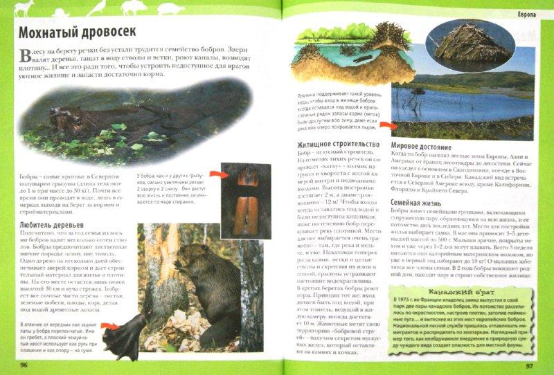 Иллюстрация 1 из 16 для Животные планеты. Энциклопедия - Кристин Лазье | Лабиринт - книги. Источник: Лабиринт
