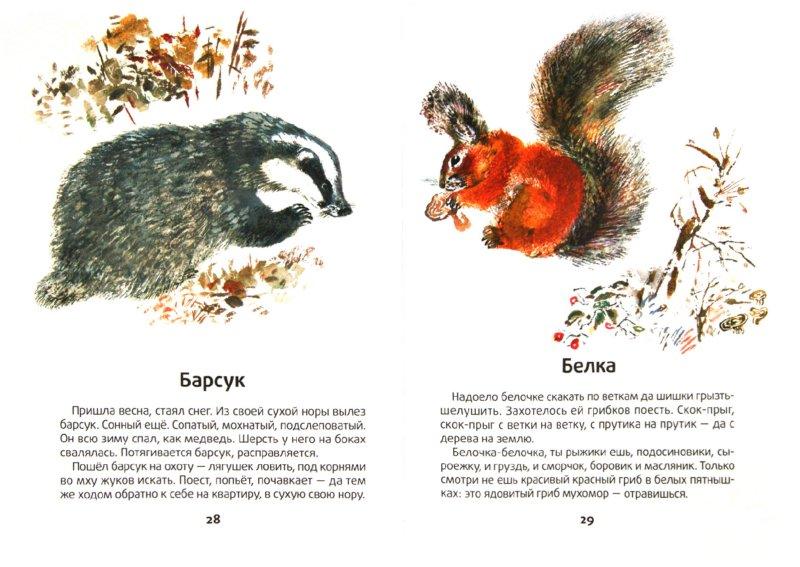 Иллюстрация 1 из 10 для Моя первая зоология - Евгений Чарушин | Лабиринт - книги. Источник: Лабиринт