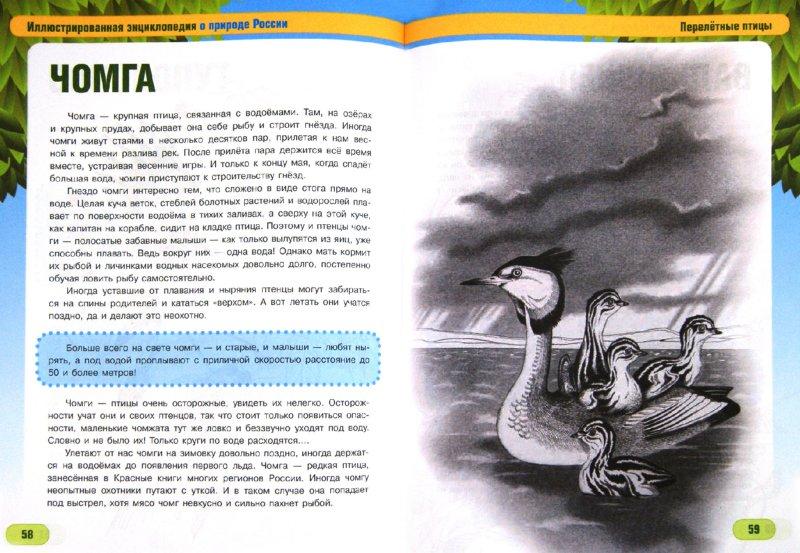 Иллюстрация 1 из 16 для Птицы наших лесов и полей - Сергей Шустов | Лабиринт - книги. Источник: Лабиринт