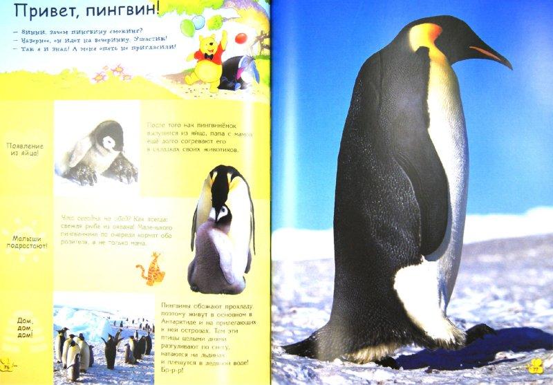 Иллюстрация 1 из 67 для Животные | Лабиринт - книги. Источник: Лабиринт