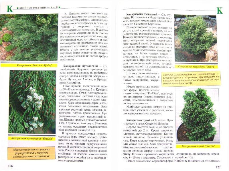 Иллюстрация 1 из 4 для Все хвойные растения - Юрий Марковский | Лабиринт - книги. Источник: Лабиринт