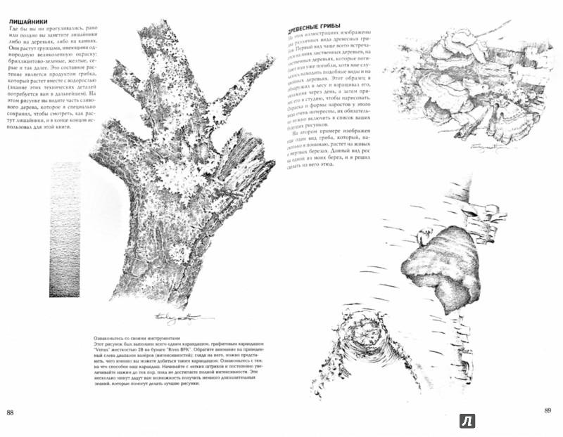 Иллюстрация 1 из 61 для Деревья - Стенли Молцмен | Лабиринт - книги. Источник: Лабиринт