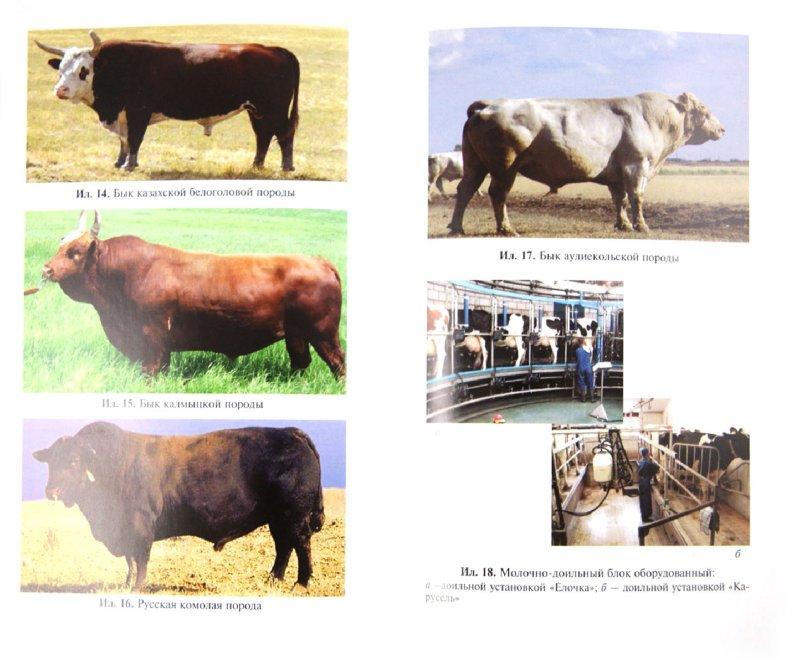 Иллюстрация 1 из 6 для Производство молока и говядины в фермерском хозяйстве - Мирось, Василец, Ковтун | Лабиринт - книги. Источник: Лабиринт