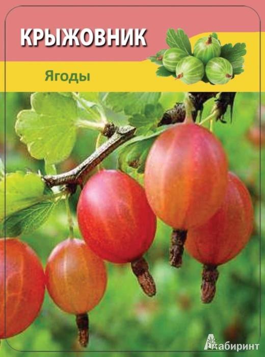 Иллюстрация 1 из 8 для Овощи и фрукты 3-12 лет - Н. Шишова | Лабиринт - книги. Источник: Лабиринт