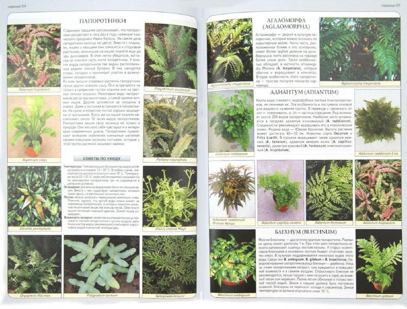 Иллюстрация 1 из 9 для Все о комнатных растениях - Неер Ян Ван дер   Лабиринт - книги. Источник: Лабиринт
