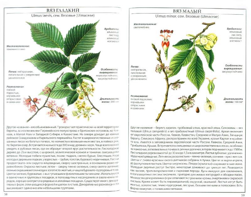 Иллюстрация 1 из 6 для Деревья и кустарники   Лабиринт - книги. Источник: Лабиринт